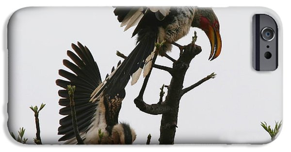 Hornbill iPhone Cases - Hornbill Courtship iPhone Case by Bruce J Robinson