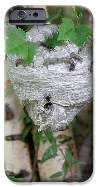 Hornets Nest iPhone Cases - Hornet Nest iPhone Case by Lawrence Lawry