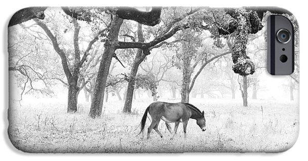 Cmlbrown iPhone Cases - Horse In Foggy Field Of Oaks iPhone Case by CML Brown