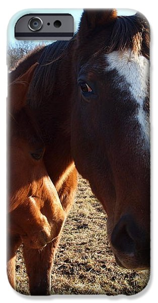 horse neck iPhone Case by Robert Margetts