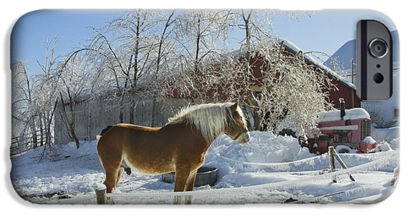 Horse iPhone Cases - Horse On Maine Farm After Snow And Ice Storm iPhone Case by Keith Webber Jr