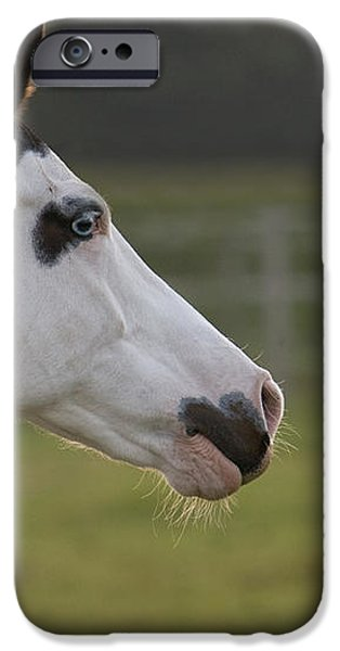 horse portrait iPhone Case by Ralf Kaiser