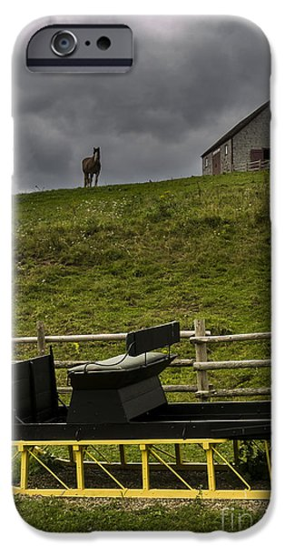 Horse Watching the Carriage iPhone Case by Darcy Michaelchuk