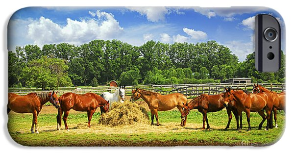 Feeding iPhone Cases - Horses at the ranch iPhone Case by Elena Elisseeva