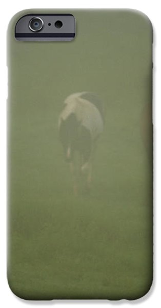 Horses Grazing In The Mist iPhone Case by Steve Gadomski