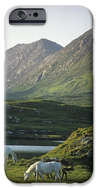 Horses Grazing On A Landscape, County iPhone Case by The Irish Image Collection