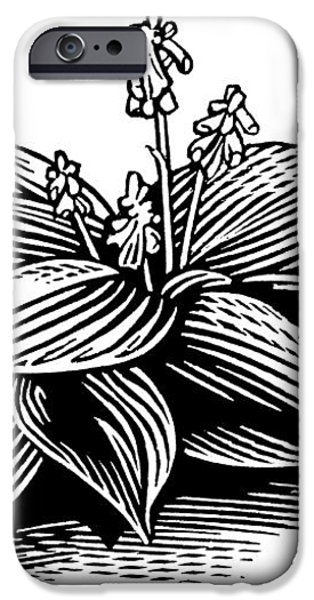 Hosta, Lino Print iPhone Case by Gary Hincks