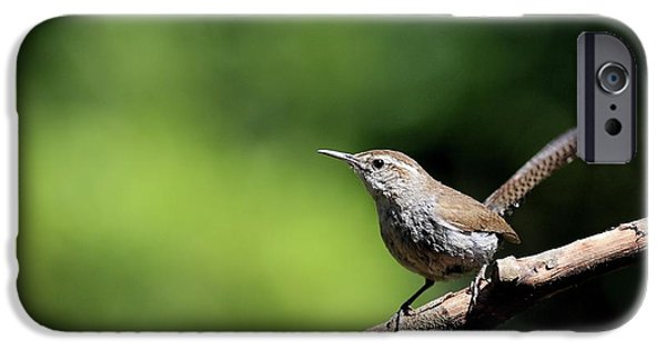 Wren iPhone Cases - House Wren . 40D8055 iPhone Case by Wingsdomain Art and Photography