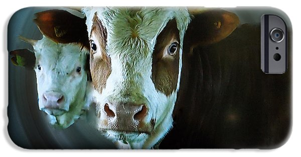Holy Cow iPhone Cases - Howdi Holy Cows iPhone Case by Colette V Hera  Guggenheim