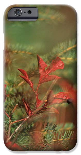 Huckleberry Leaves In Fall Color iPhone Case by One Rude Dawg Orcutt