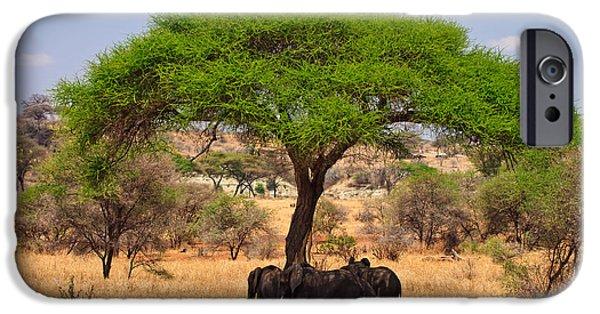 Kenya Photographs iPhone Cases - Huddled in Shade iPhone Case by Adam Romanowicz