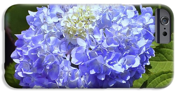 Big Al iPhone Cases - Huge Hydrangea iPhone Case by Al Powell Photography USA