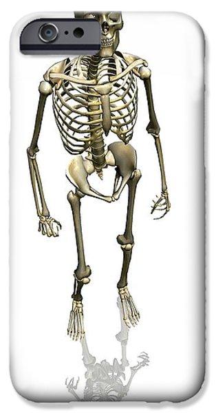 Human Skeleton, Artwork iPhone Case by Friedrich Saurer