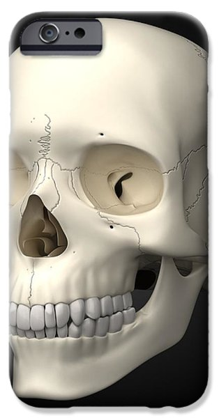 Human Skull, Artwork iPhone Case by Visual Science