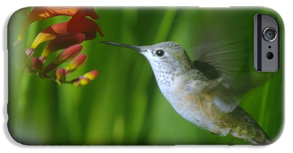 Action Shot iPhone Cases - Humming bird  iPhone Case by Jeff  Swan