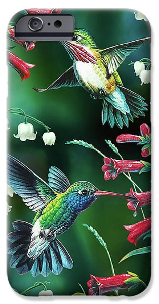 Birds iPhone Cases - Humming Birds 2 iPhone Case by JQ Licensing