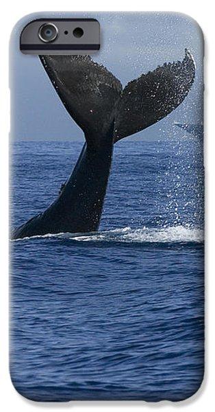 Humpback Whale Tail Lobbing Near Cruise iPhone Case by Flip Nicklin