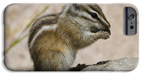 Chipmunk iPhone Cases - Hungry iPhone Case by Jon Berghoff