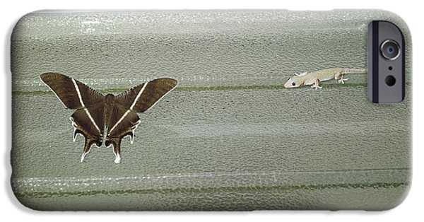 Butterfly Prey iPhone Cases - Hunting Gecko iPhone Case by Peter Scoones