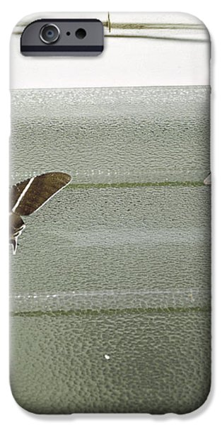 Hunting Gecko iPhone Case by Peter Scoones