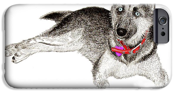 Husky iPhone Cases - Husky with blue eyes and red collar iPhone Case by Jack Pumphrey