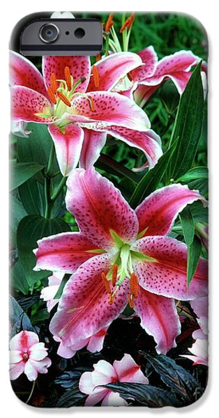 Lilium iPhone Cases - Hybrid Lily (lilium X Parkmannii) iPhone Case by Vaughan Fleming