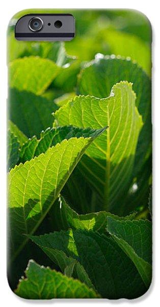 Hydrangea foliage iPhone Case by Gaspar Avila