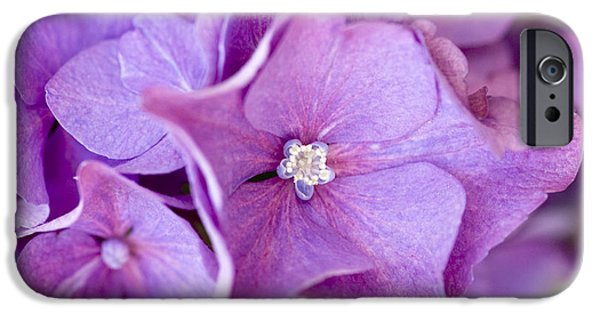 Purple Hydrangeas iPhone Cases - Hydrangea iPhone Case by Frank Tschakert