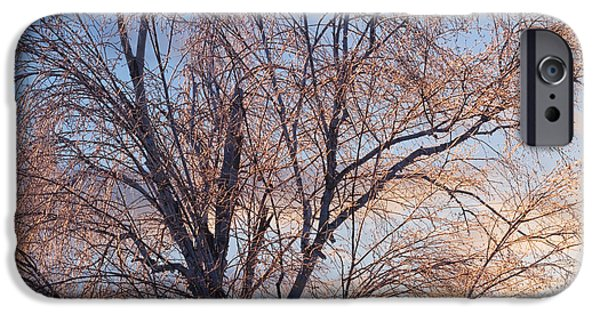 Winter Trees Photographs iPhone Cases - Ice On Tree At Sunrise iPhone Case by Keith Webber Jr