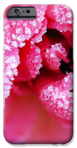 Icy rose iPhone Case by Elena Elisseeva