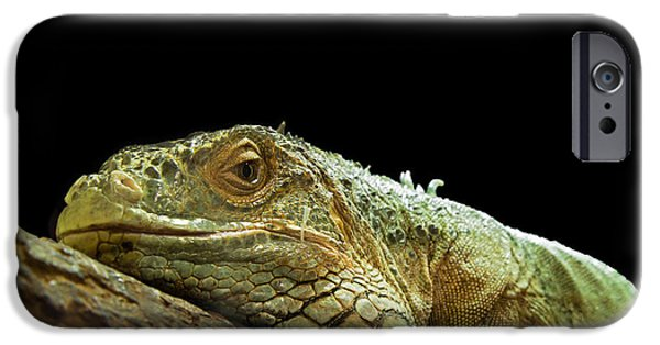 Chameleon iPhone Cases - Iguana iPhone Case by Jane Rix