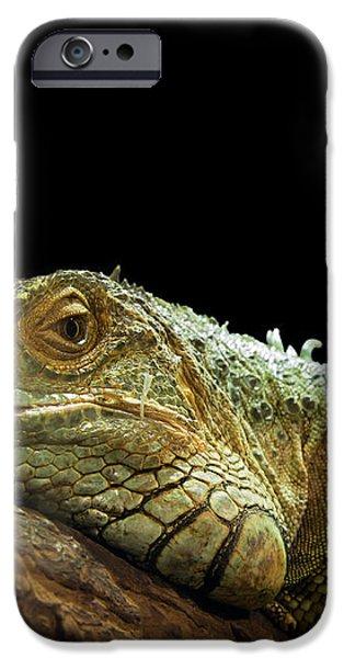 Iguana iPhone Case by Jane Rix