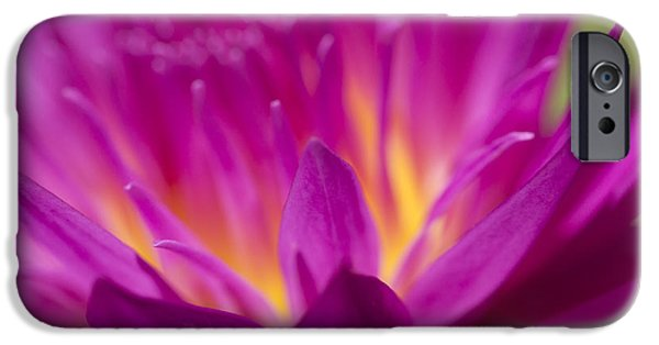 Nature Center Pond iPhone Cases - In A Dream II iPhone Case by Priya Ghose