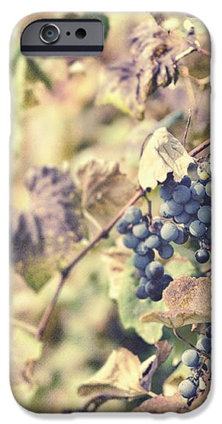 In the Vineyard iPhone Case by Lisa Russo