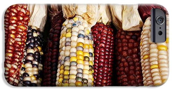 Farm Stand Photographs iPhone Cases - Indian Corn iPhone Case by Jarrod Erbe