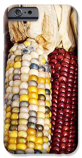 Indian Corn iPhone Case by Jarrod Erbe