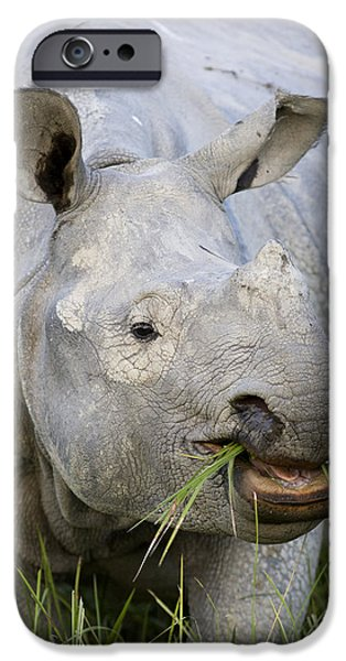 Indian Rhinoceros Grazing Kaziranga iPhone Case by Suzi Eszterhas