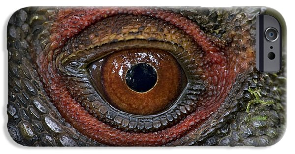 New Individuals iPhone Cases - Indonesian Forest Dragon Eye Papua New iPhone Case by Piotr Naskrecki