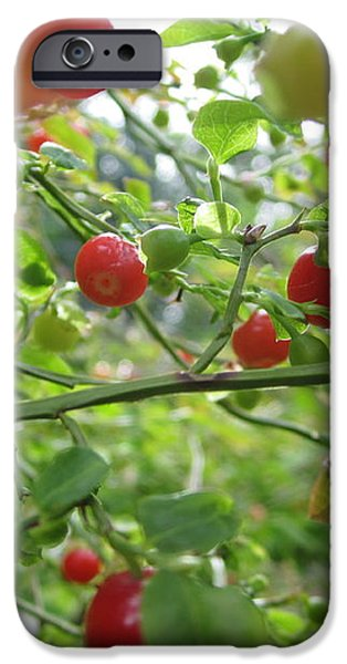 Inside The Red Huckleberry iPhone Case by Kym Backland