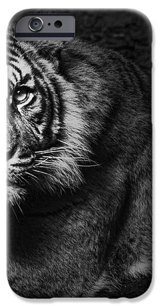 Intent iPhone Case by Andrew Paranavitana