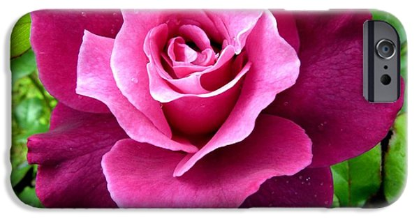 Intrigue iPhone Cases - Intrigue Rose iPhone Case by Will Borden
