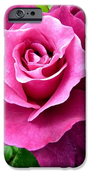 Intrigue Rose iPhone Case by Will Borden