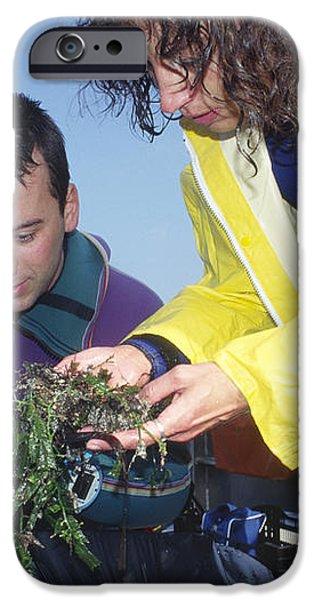 Invasive Seaweed Control iPhone Case by Alexis Rosenfeld