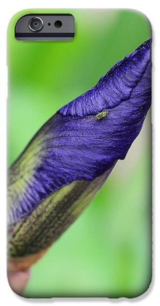 Iris and Friend iPhone Case by Lisa  Phillips