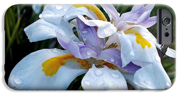 Wet Petals iPhone Cases - Iris enjoying the Sunshine iPhone Case by Kaye Menner