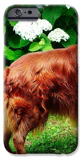 Irish Setter III iPhone Case by Jenny Rainbow