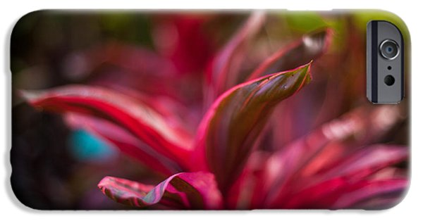 Bromeliad iPhone Cases - Island Bromeliad iPhone Case by Mike Reid