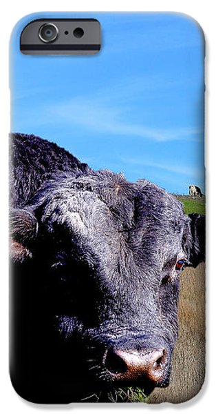 Its A Bulls Life iPhone Case by Wingsdomain Art and Photography