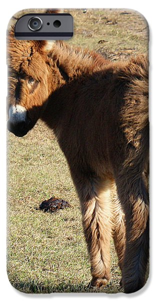 Its a Cow Pasture What Did You Expect iPhone Case by Roena King