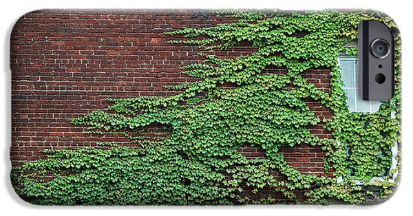Overruns iPhone Cases - Ivy Covered Window iPhone Case by Gary Slawsky